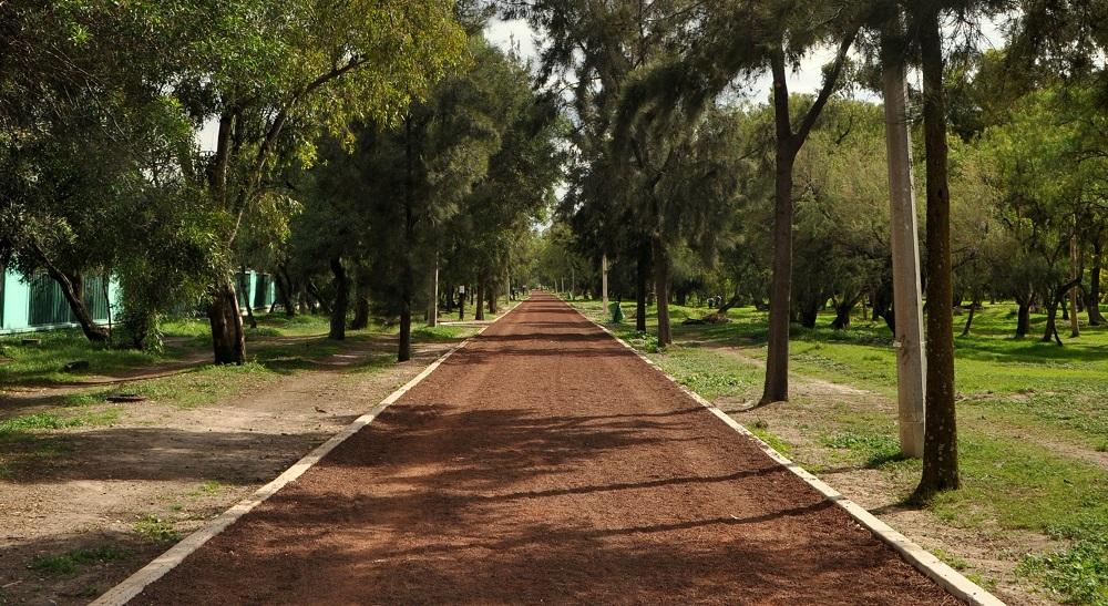 bosque-de-aragon